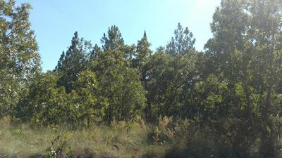 TRACT J CENTERWOOD ROAD, WILLISTON, SC 29853 - Photo 1