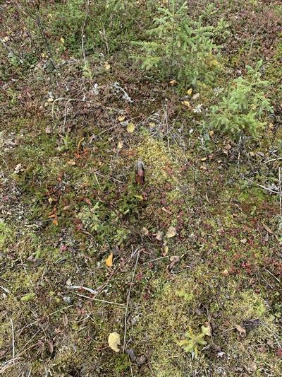L1 B8 COHOE SHORES, Kasilof, AK 99610 - Photo 2