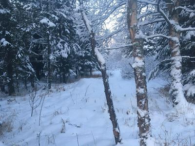 L4 B8 COBRA, Anchorage, AK 99516 - Photo 1