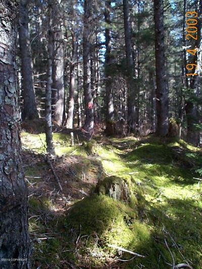 L8A BUCKINGHAM COVE, Seldovia, AK 99663 - Photo 2