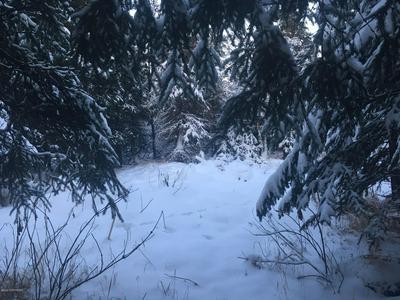 L4 B8 COBRA, Anchorage, AK 99516 - Photo 2