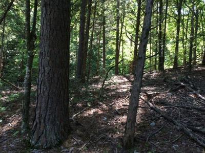 1620 PINECREST LANE, Rogers, AR 72756 - Photo 2