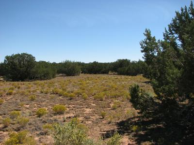LOT 46 CHEVELON RETREAT #1 -- # 46, Heber, AZ 85928 - Photo 2