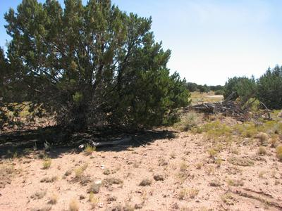 LOT 46 CHEVELON RETREAT #1 -- # 46, Heber, AZ 85928 - Photo 1