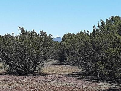 LOT 22C 18.02 ACRES APACHE WOODLAND, Vernon, AZ 85940 - Photo 2