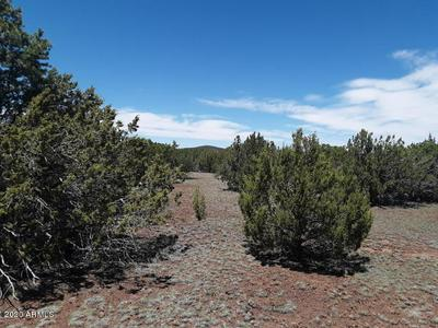 LOT 22C 18.02 ACRES APACHE WOODLAND, Vernon, AZ 85940 - Photo 1