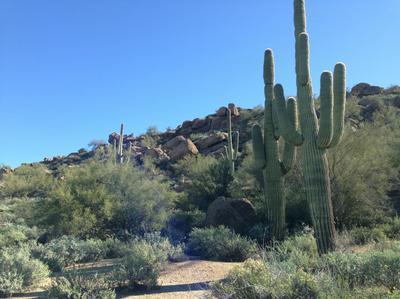 27915 N 103RD PL # 149, Scottsdale, AZ 85262 - Photo 2