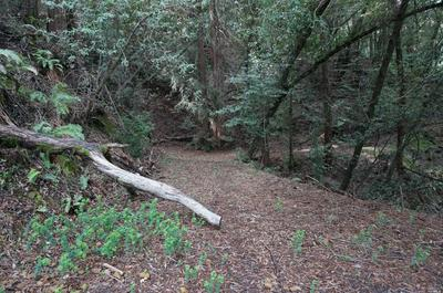 11 WILLOW HILL RD, Ross, CA 94957 - Photo 2