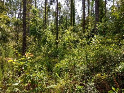 0 SHORT PINE LANE, Westville, FL 32464 - Photo 1
