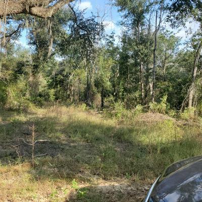 000 DELLWOOD-CYPRESS ROAD, Marianna, FL 32446 - Photo 2