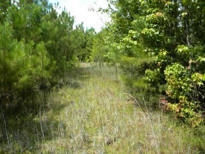 0000 ALEXANDER ROAD, Yemassee, SC 29945 - Photo 1
