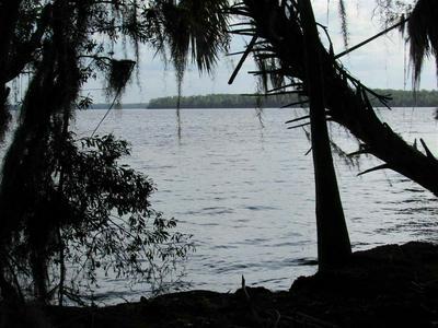 0 UNASSIGNED LOCATION, WELAKA, FL 32193 - Photo 2