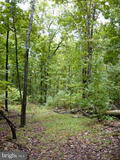 20972 STEPTOE HILL RD, MIDDLEBURG, VA 20117 - Photo 2
