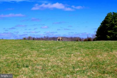 37.08 ACRES ON BISHOP MEADE, BOYCE, VA 22620 - Photo 1
