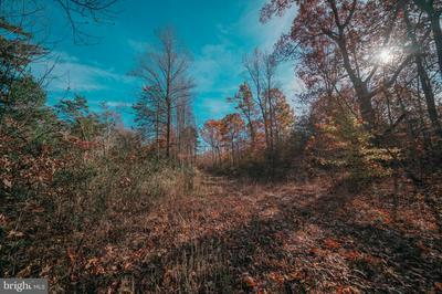 OFF OD RT 33 / SPOTSWOOD TRAIL, RUCKERSVILLE, VA 22968 - Photo 1