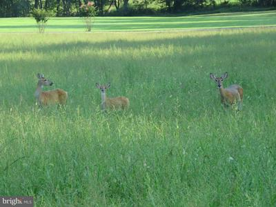 12553 WALNUT CREEK LN, RIXEYVILLE, VA 22737 - Photo 2