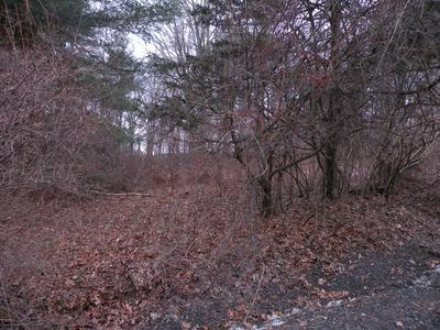 RICHARD HILL RD, Hillsdale, NY 12529 - Photo 1