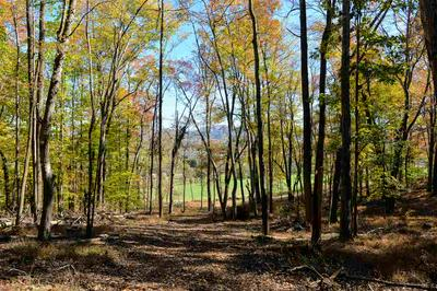 TBD CHAPEL HOLLOW RD, AFTON, VA 22920 - Photo 1