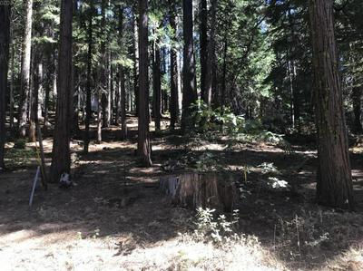 2900 SNOWSHOE THOMPSON TRL, Arnold, CA 95223 - Photo 1