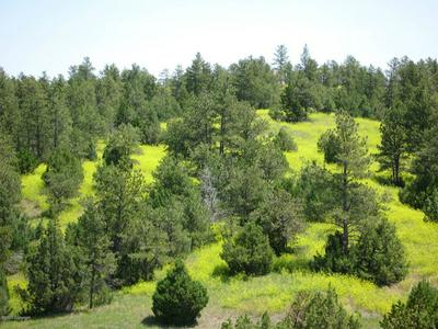 TBD R RANCH ROAD, Pine Haven, WY 82721 - Photo 1