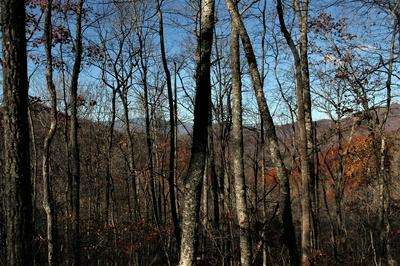 0 BATTLE BRANCH, Bryson City, NC 28713 - Photo 2
