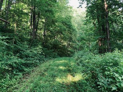 60 TIGER TAIL DR, Sylva, NC 28779 - Photo 2