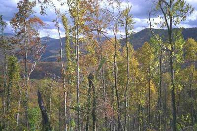 11 LITTLE NICKAJACK RD, Franklin, NC 28734 - Photo 2