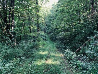 60 TIGER TAIL DR, Sylva, NC 28779 - Photo 1