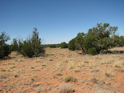 5994 HARDEN ROAD, Heber, AZ 85928 - Photo 2
