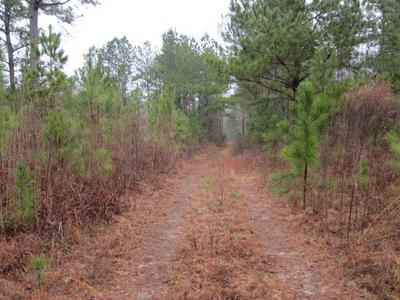 0 HIGHWAY 137, CUSSETA, GA 31805 - Photo 2