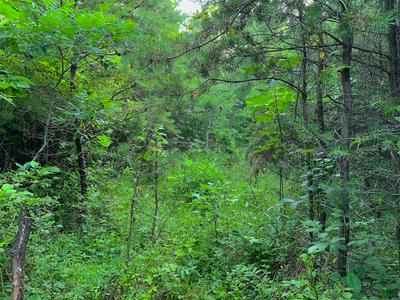 0 TWO MILE RUN ROAD, Cutler, OH 45724 - Photo 2