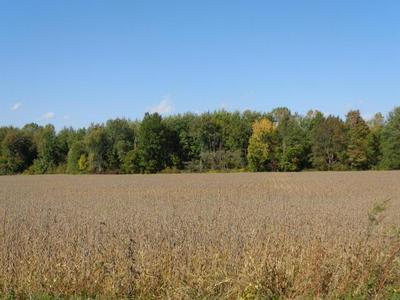 1538 COUNTY ROAD 136, Cardington, OH 43315 - Photo 2