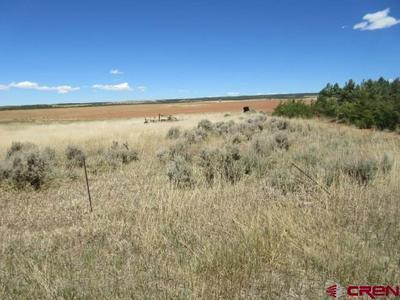 TBD ROAD M.4, Cahone, CO 81324 - Photo 2