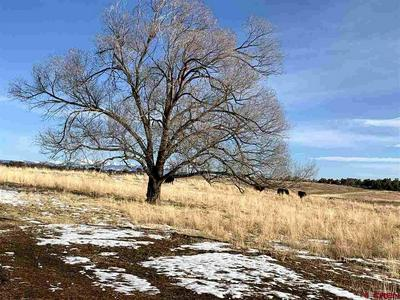 TBD HIGHWAY 491, LEWIS, CO 81327 - Photo 2