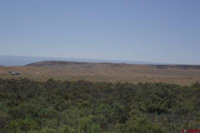 TBD COUGAR MOUNTAIN ROAD, Hotchkiss, CO 81416 - Photo 2