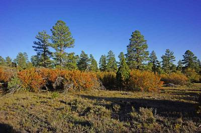TBD ROAD 31, Dolores, CO 81323 - Photo 1