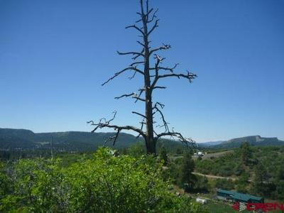 979 CACTUS DR, Pagosa Springs, CO 81147 - Photo 2