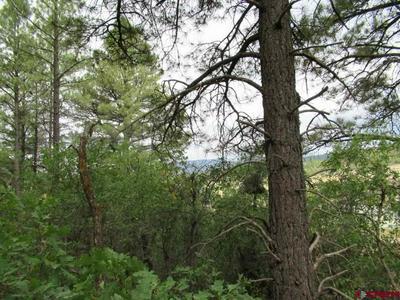 54 RIVER RUN DR, Pagosa Springs, CO 81147 - Photo 1