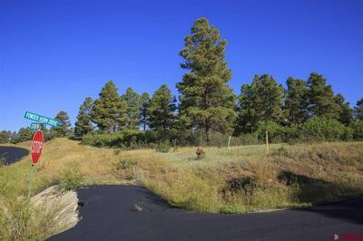 156 POWDERHORN DR, Pagosa Springs, CO 81147 - Photo 2