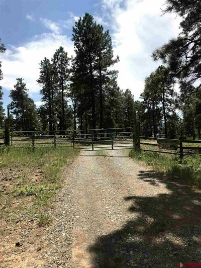 TBD PIT COURT, Pagosa Springs, CO 81147 - Photo 1
