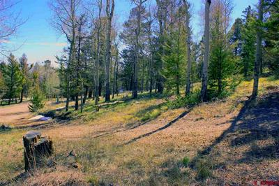 1008 KEBLER TRL, Powderhorn, CO 81243 - Photo 2