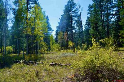 TBD LOS RANCHITOS DRIVE, Durango, CO 81301 - Photo 1