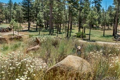 36430 BUTTERFLY PEAK RD, Mountain Center, CA 92561 - Photo 2