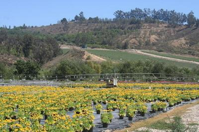 5870 E LOS ANGELES AVE, Somis, CA 93066 - Photo 2