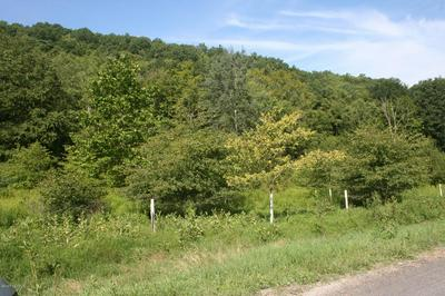 SONES RD AT LIBERTY DR, Millville, PA 17846 - Photo 1