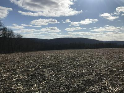 LOT 5 HOLLY ROAD, Paxinos, PA 17860 - Photo 2