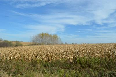 40 ACRES BUTTERNUT ROAD, STRATFORD, WI 54484 - Photo 1