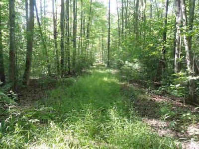 78 ACRES COUNTY ROAD X, Pittsville, WI 54466 - Photo 2