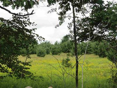 78 ACRES COUNTY ROAD X, Pittsville, WI 54466 - Photo 1