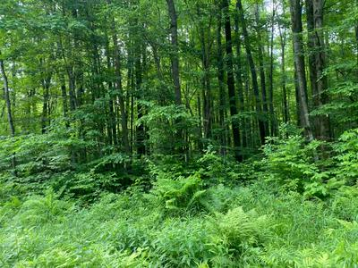 80 ACRES N BRANCH ROAD, Wittenberg, WI 54499 - Photo 1